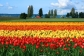Skagit_Valley_Tulip_Festival_Events_Exhibits